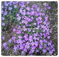 【雑記】紫の花2 【英】例文 【英5トレ言葉】練習… - 【まんが&フォト】 ほかの国のコトバ ― 8言語つまみぐい