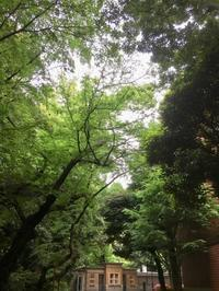 早速上野公園まで散歩 - 好きなものに囲まれて2