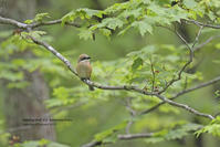 理想な新緑の森 - healing-bird