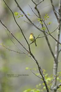 ノジコの森 - healing-bird