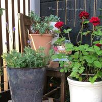 玄関周りと、お庭の入口 - misaの庭暮らし~Abandon~