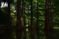 九大の森 - 上を向いて歩こう