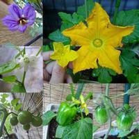家庭菜園 - NATURALLY