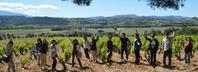 ワインを深く知るということ - WineShop FUJIMARU