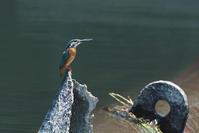 遠い踊場から - 野鳥と自然