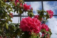 官庁街の初夏の花々 - ちょっとネコばか