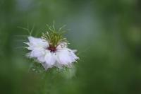 庭に咲く初夏の花 ② 二ゲラ  - 風の彩り-2