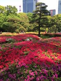 休日散歩 皇居東御苑から東京駅へ  - mayumin blog 2