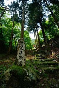新緑と初夏の花@古知谷阿弥陀寺 - デジタルな鍛冶屋の写真歩記