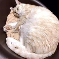ぼよーん びよーん - 賃貸ネコ暮らし|賃貸住宅でネコを室内飼いする工夫