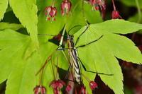 カンボウトラカミキリ 2 - Insect walk