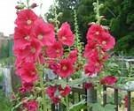 愛しの花たち in Canada