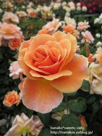 バラ園~③お気に入りのバラ - nanako*sweets-cafe♪