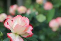 茨城県フラワーパーク ② - フェイズと写真と時々・・・!