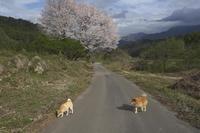sakura&waku(5cut) 東北の旅編 -     ~風に乗って~    Present