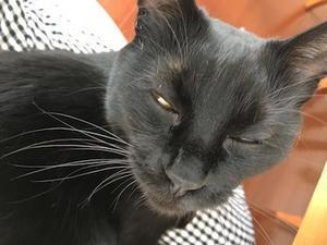 黒猫はまっくろぢゃない - いちじく日記*てんかんをご存知?*
