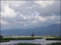 福島潟は夏の装い - じょんのび