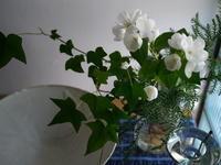 梅花ウツギ - small space ・・・小さな白い家・・・