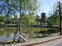 奈良盆地1周イベント… - 50からの足習い