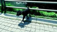 散歩 - Sorekara・・・