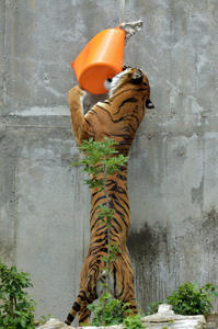 コスパ悪し - 動物園へ行こう