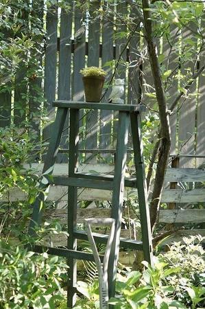庭仕事 - Mimosa Garden*Diary