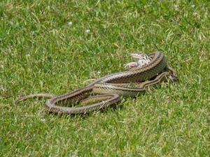 蛇の脅威から逃げる蛙 - 日々カメラと共に
