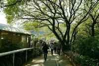 若葉萌ゆ - 写真巡礼「日本の風景」