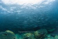 壁 - Diving Life ~Aita pe'a pe'a~