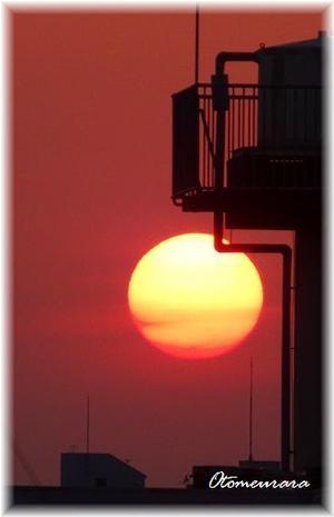 黄金色の夕陽・・・ と  暑がりうらら - 日々楽しく ♪mon bonheur