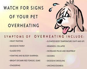 この夏、犬の熱中症に気を付ける - 弥生、スコットランドはエジンバラ(エディンバラ)発!
