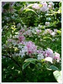 花フェスタ記念公園へ10 - おいしく、楽しく。