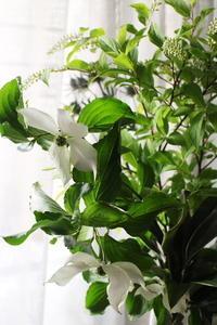 緑の季節 - クラシノカタチ