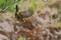 最近市内の公園で写した野鳥 - 上州自然散策2
