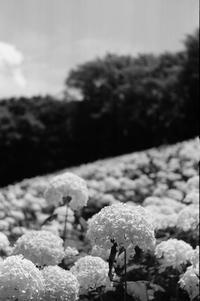 Floral Slope - g o n b l o