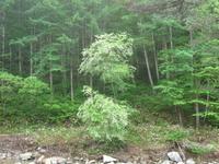 山の木の花 - きこりの店 舘岩日記