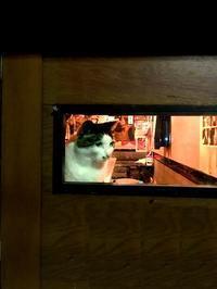ゴールデン街の猫先輩 - ティダぬファの雑記帳
