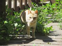 """""""汚れた猫@ビーチのにゃんこ♪ (=^ェ^=)⑦""""~ローマ近郊の小さな小さな海沿いの村から♪ 2017~ - ROMA  - PhotoBlog"""