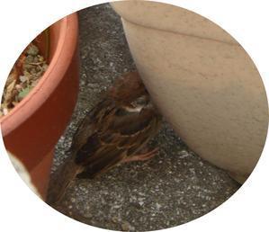 子雀の命を守る姿を捕えた一瞬… -