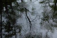 水すましのステップ  - 風の彩り-2