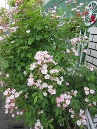 バレリーナと安曇野と - 花の自由旋律