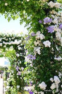 Garden Necklace YOKOHAMA 2017(17) - 今日の小さなシアワセ