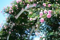 Garden Necklace YOKOHAMA 2017(16) - 今日の小さなシアワセ