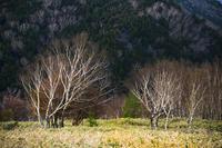 シュポシュポの木 - たなぼた