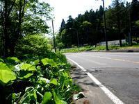 万緑の山の恵み - ゆうゆうタイム