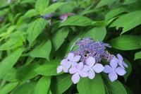 8年ぶりに山梨県・高川山に その1 - 季節(いま)を求めて
