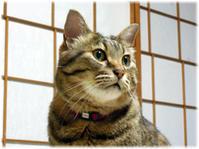 大阪滞在、実家の猫にごあいさつ(追記) - nazunaニッキ