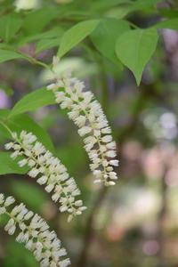 ◆花情報◆ 髄菜(ずいな) の花が咲いています - 名鉄犬山ホテル情報