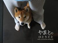 """犬の本 【""""遊んでしつける""""愛犬トレーニング80】 - yamatoのひとりごと"""
