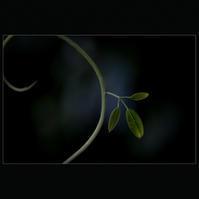 ☆ untitled ☆ - ON ANY SUNDAY 2.............
